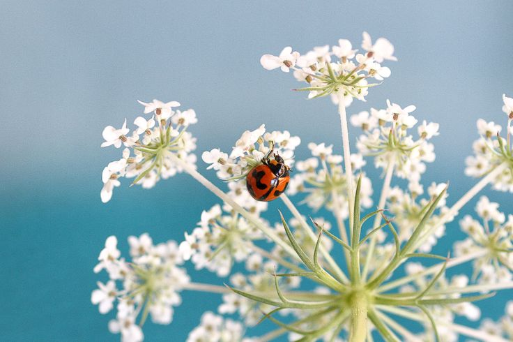 Ladybug - By Alycia Rowe