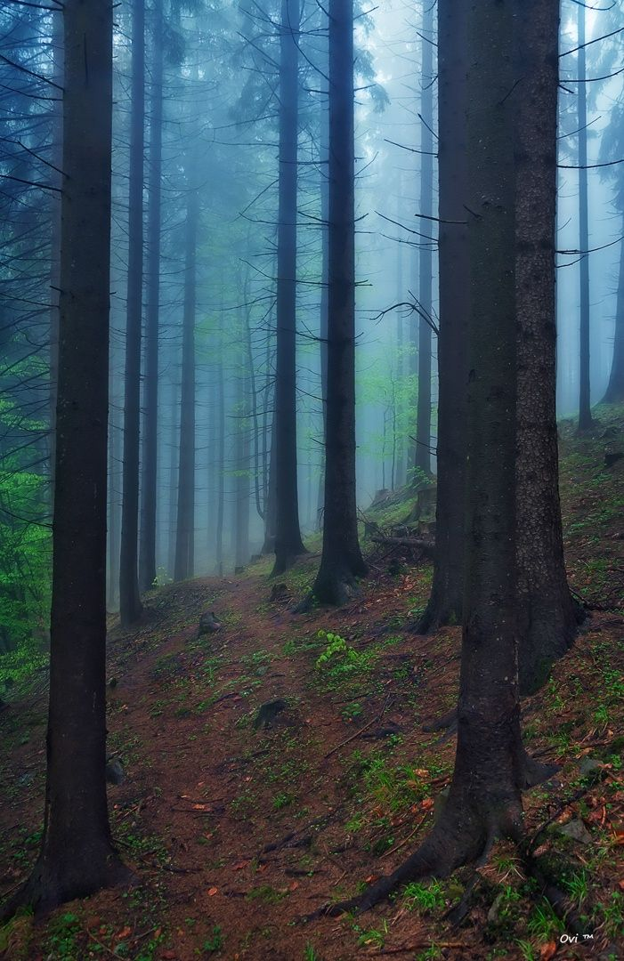 The forest by Ovi TM on 500px