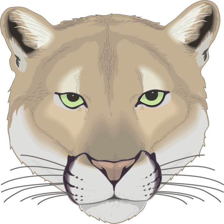 17 Best images about Cougars on Pinterest | Logos, Football and ...