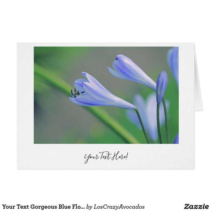 Your Text Gorgeous Blue Flowers Greeting Card