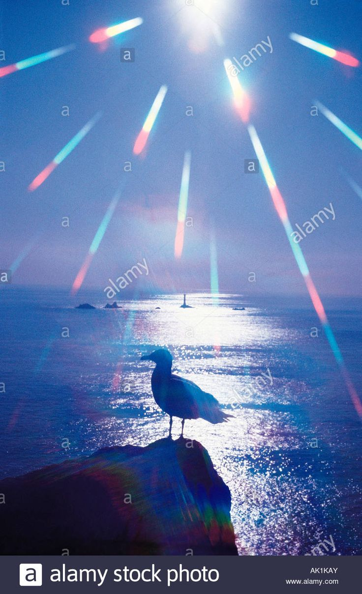 Sunburst and silhouette of seagull with lighthouse in the distance. United Kingdom. England. Cornwall. Lands End. Stock Photo