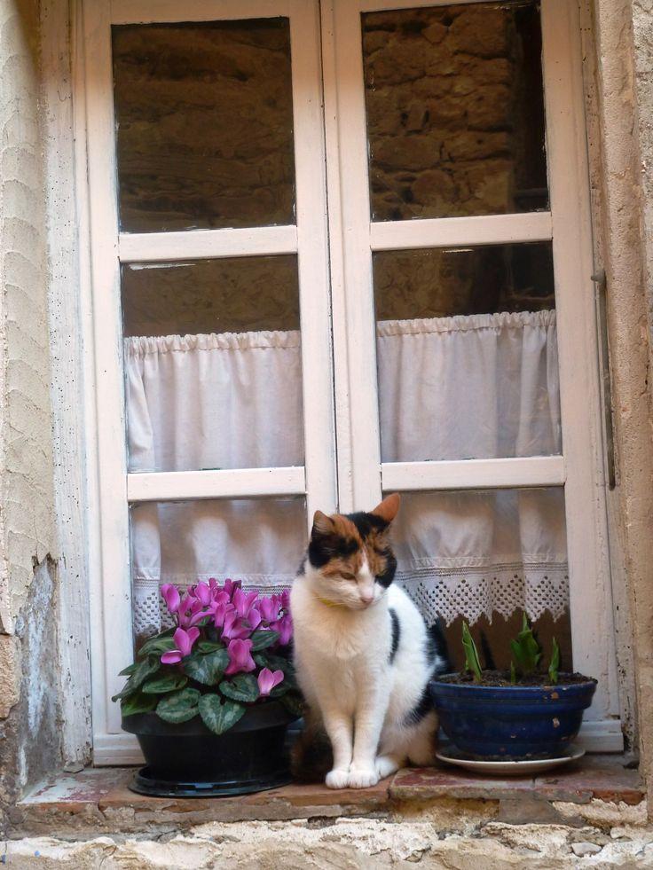 My neighbor's cat, Fripponne