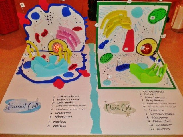 Animal and plant cell project idea. Foam is awesome to work with and really easy! #schoolproject #cellproject