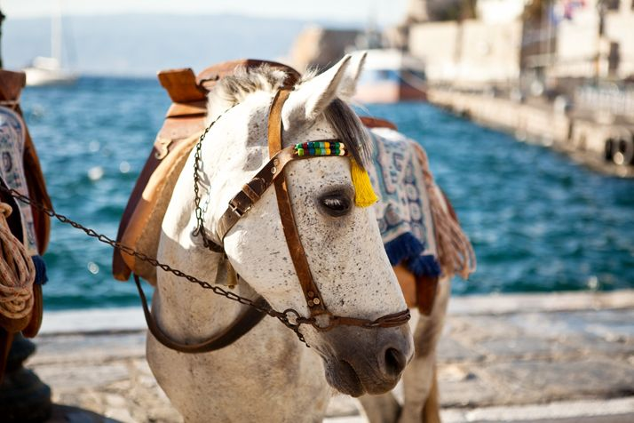 A donkey in Greece
