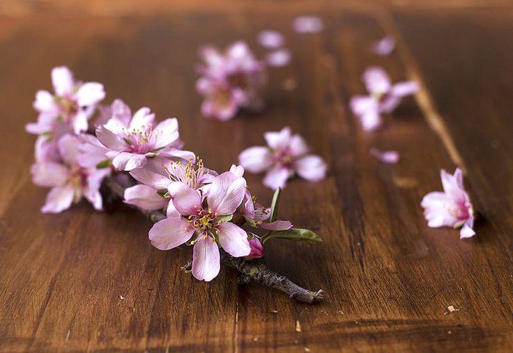 Ssssshhhh....se acerca la primavera...