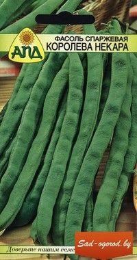 Фасоль спаржевая  Ранний высокоурожайный сорт европейской селекции. Растение вьющееся, очень высокое, нуждается в опоре. Стручки без волокна, темно-зеленые, плоские, месистые, длинной 25-30 см. Отличается продолжительной отдачей урожая. Используется для консервирования, замораживания и приготовления всевозможных овощных гарнирах.