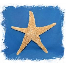 Мексиканаская морская звезда