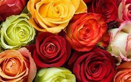 Japanische Kirschblüte, Kirsche Blumen, Vögel, Feder Hintergrundbilder | Hintergrundbilder Vorschau | DE.Best-Wallpaper.Net