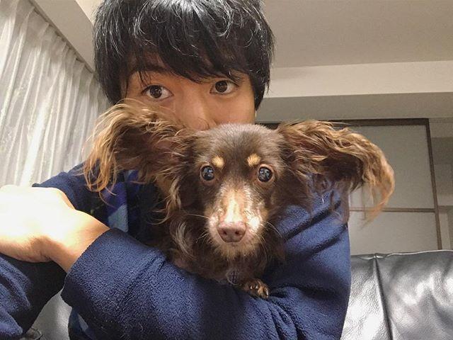 2週間ぶりのリロくん。  #リロ #リトル #little #可愛い #愛犬 #癒し #おじい #チワックス #仲良し #高槻 #大阪 #japan #iphone7 #今回は一瞬だけ