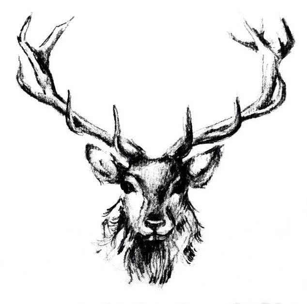 Katy Jade Dobson ART - Stag logo drawing