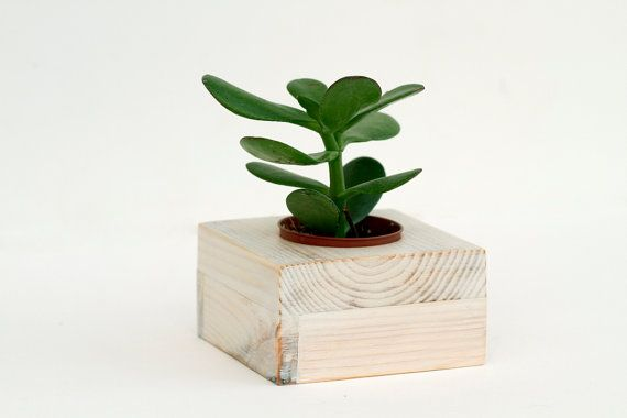 Succulent planter, white wedding decoration wooden plant pot eco friendly reclaimed geometric shape