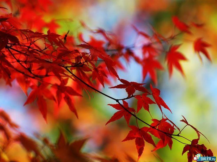 Írók, költők októberről...,Bormondások,Boros közmondások,Boros szólások,Szeretetet adjon...,Gazdag László : Fogadd el!,Csoda,Az ember lelke...,A dalról...,A boldogság..., - agnia Blogja - Egészség,Elgondolkodtatók,Gasztronómia,Gondolataim az élet dolgairól.,Horoszkópos...,Humormorzsa,Idézetek, aforizmák, bölcselet,Jó reggelt!,Képek,Mások írták,Olvastam..továbbadom...,Szép történetek...,Szeretet, szerelem,Szösszeneteim,Természet,Versek,Ünnepek-jeles napok,Zene,