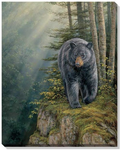 The Rocky Outcrop Black Bear Wrapped Canvas Art features a black bear standing at the top of a moss covered outcrop in the middle of the forest. Arrives ready to hang, this unframed canvas bears a cle