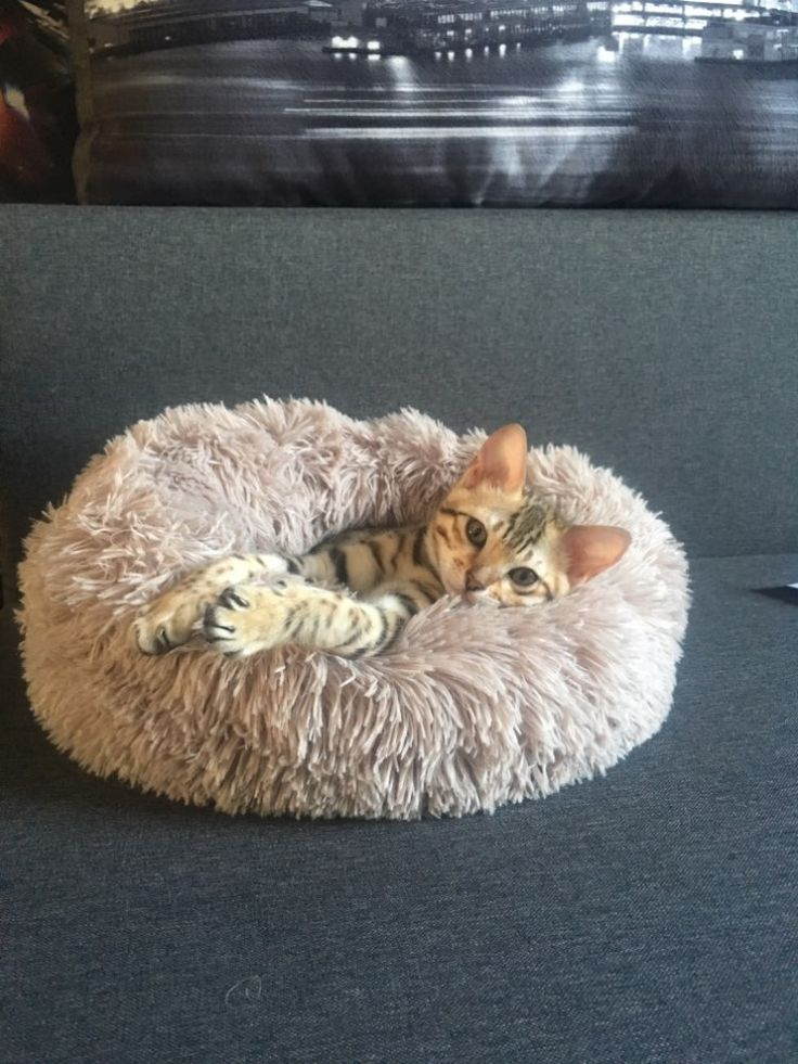 Comfy Calming Dog/Cat Bed Pet Supplies tatunis Cat pet