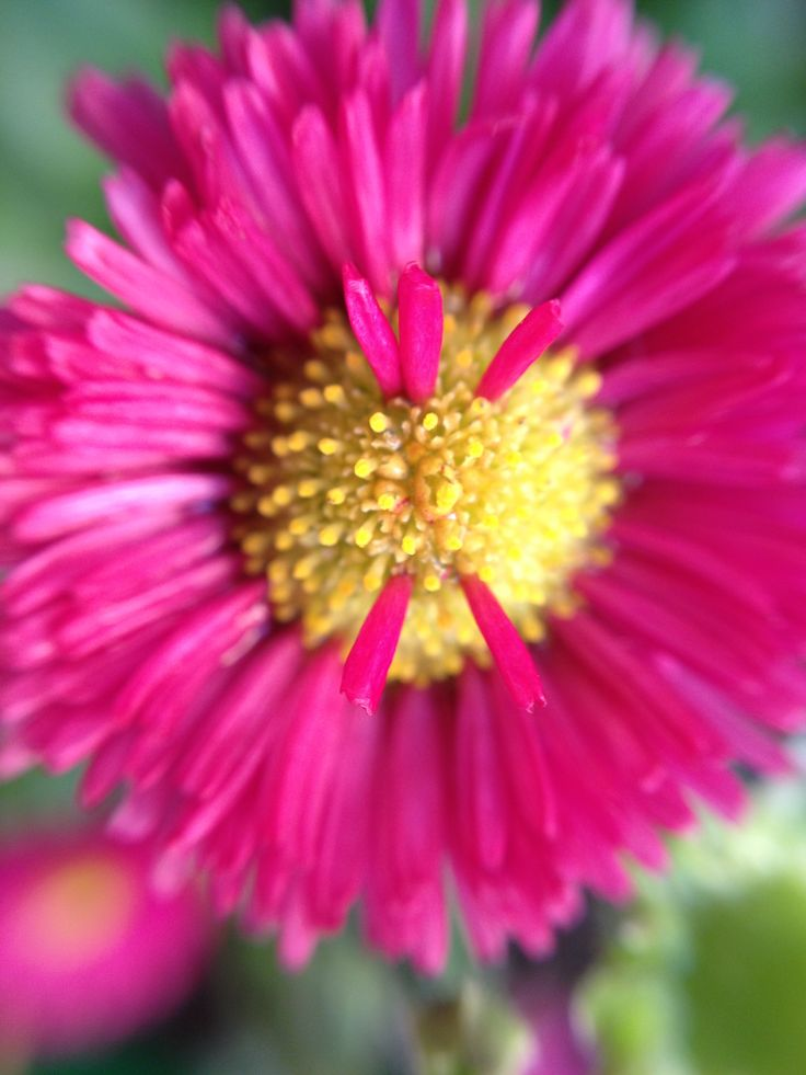 olloclip daisy