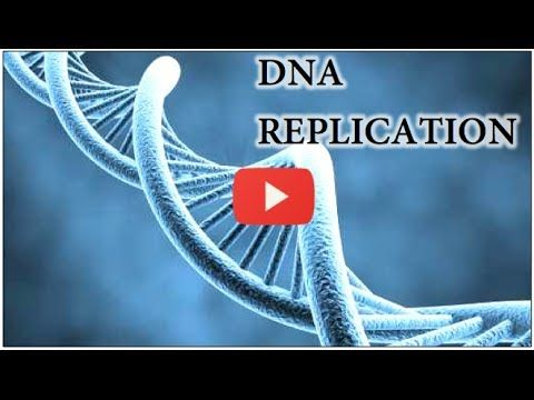 DNA Replication Animation - Super EASY - YouTube