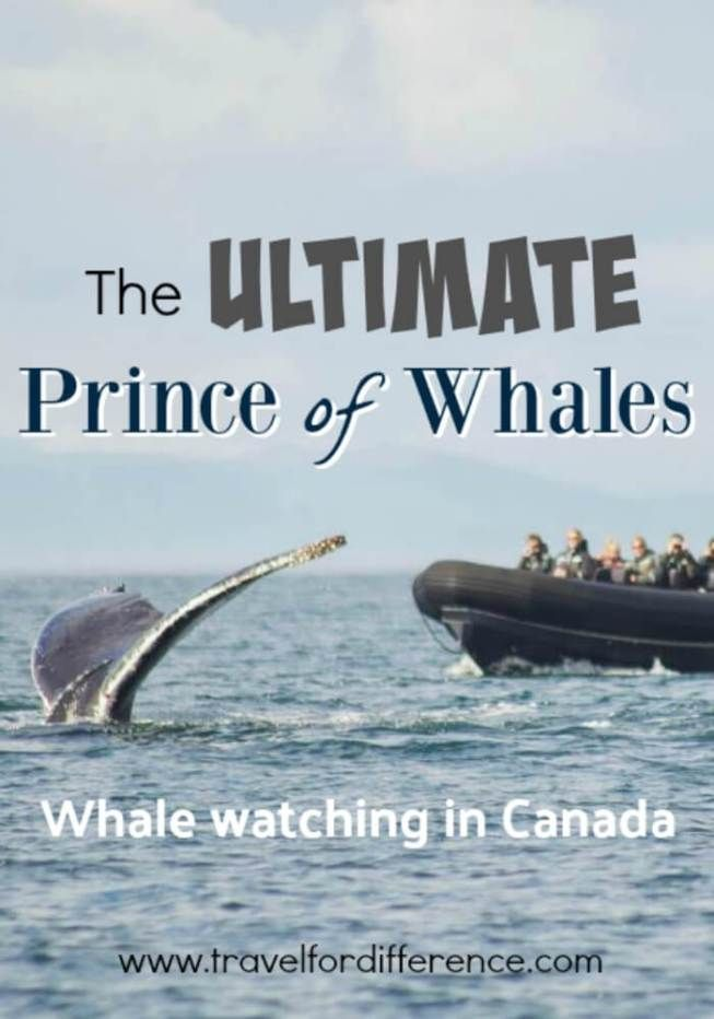 Here's some information about the Prince of Whales whale watching tour in Victoria, Canada.  It\'s a sustainable, eco-friendly whale watching trip! #WhaleWatching #EcoFriendly #PrinceofWhales #SustainableTourism