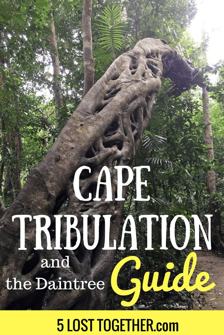 AUSTRALIA - Guide to Cape Trib and the Daintree Rainforest