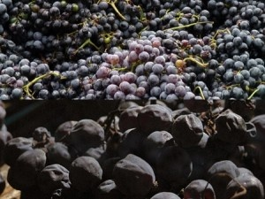 Ripasso della Valpolicella: the odd story of a wine, it existed but nobody knew it