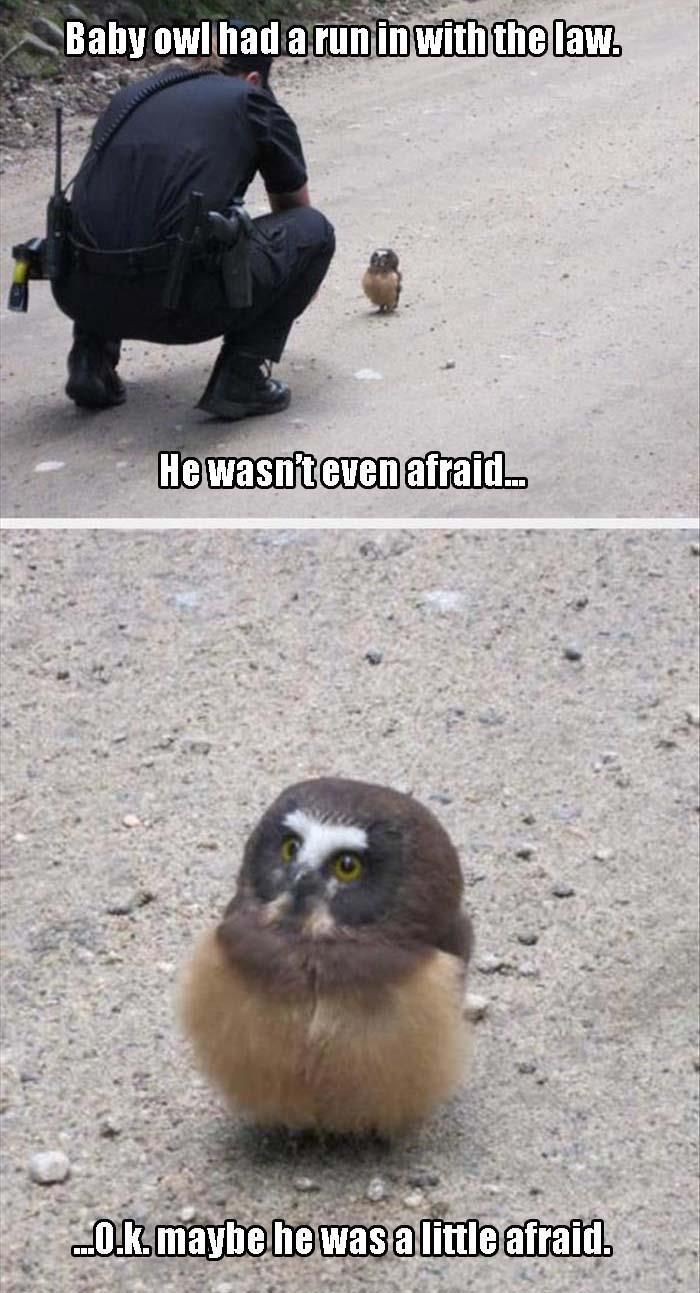 Baby owl had a run in with the law:
