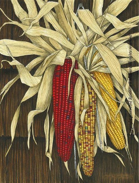 Indian Corn By Ramona Maziarz Corn Drawing Watercolor