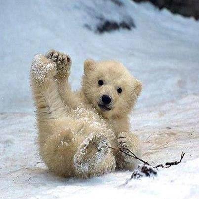 A polar bears idea of summer sliding.