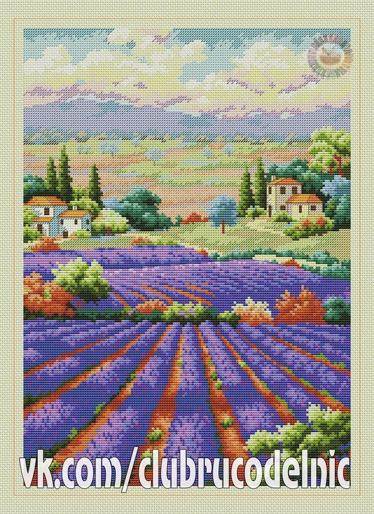 fields of lavender-1