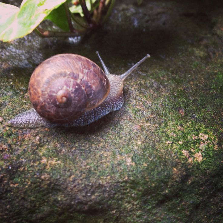 Snail in the garden after the rain