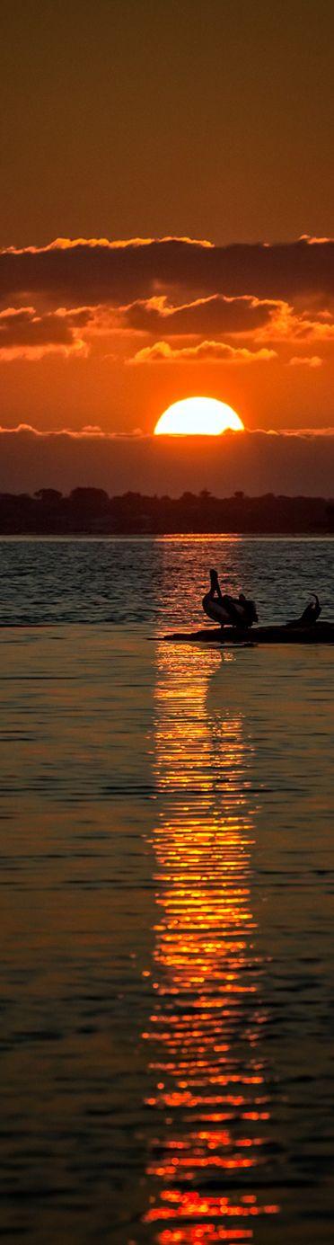 Sunset with Australian Pelicans and Australasian Darter - Peel Inlet, Mandurah