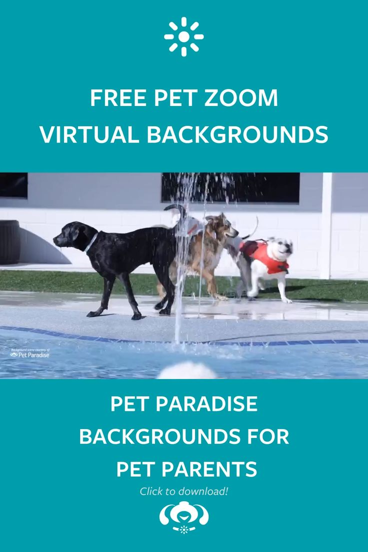 Pin on Pets in Paradise