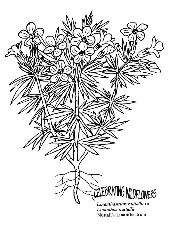 Coloring Book Pages Wildflower Beautiful