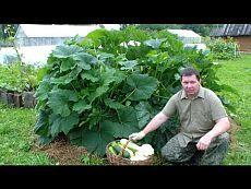 ▶ Выращивание кабачков, цуккини и патиссонов хитрым способом - YouTube