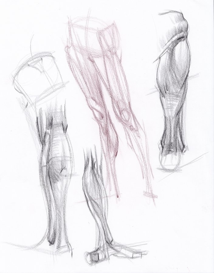 Leg sketchImage, View, Drawing Labs, Sketches Iii, Figures Drawing, Anatomy Study, Hampton Anatomy, Legs Sketches