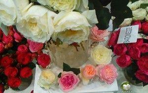 Антикварные розы - roses_demoplan.ru