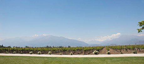 Viñedos Almaviva- Almaviva vineyards