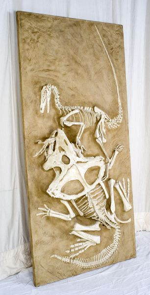 One of the most amazing fossil finds ever: during the Polish-Mongolian paleontological