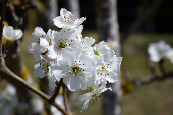 Comença la floració a l'Espai Can Mir