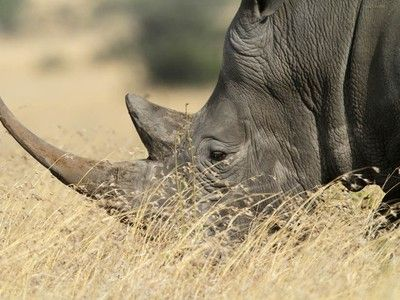 Google Funds Spy Technology for Catching Poachers