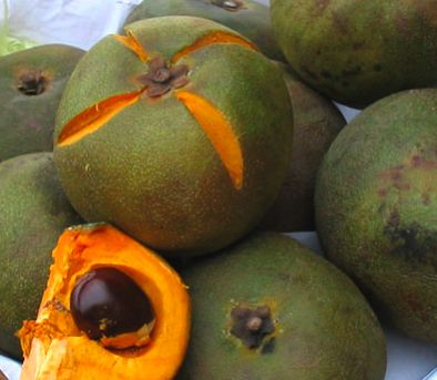 Lucuma! a typical fruit of Chile