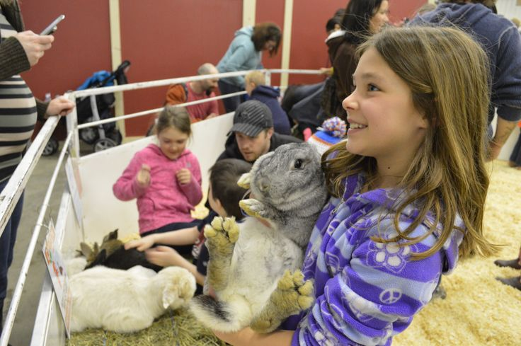 Royal Manitoba Winter Fair, Keystone Centre, Brandon, Manitoba - Petting Zoo - Bunny