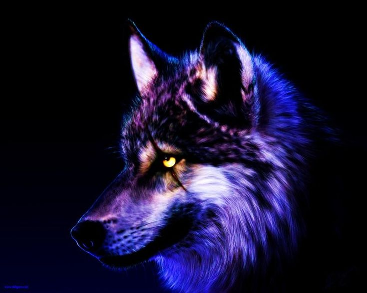 cool purple wolves | Unusual Fixed Wolf Wallpaper By Wolfkermek Dcuz : Unusual Fixed Wolf ...