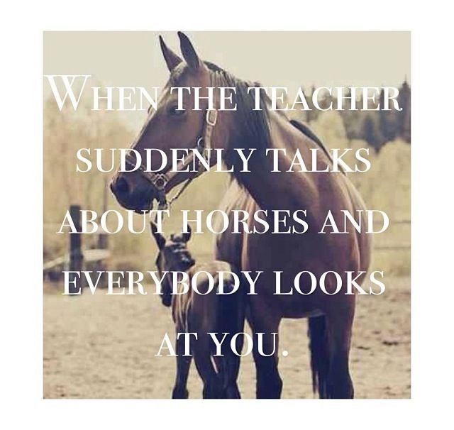 Story of my Life.. haha actually did hapen in school, and my teacher talked about horses alot cuz she owned 11 of them