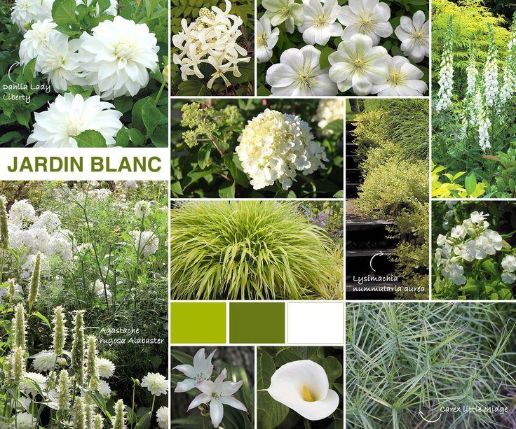 Inspiration jardin blanc. Bien fait. Fiche de chaque plante.