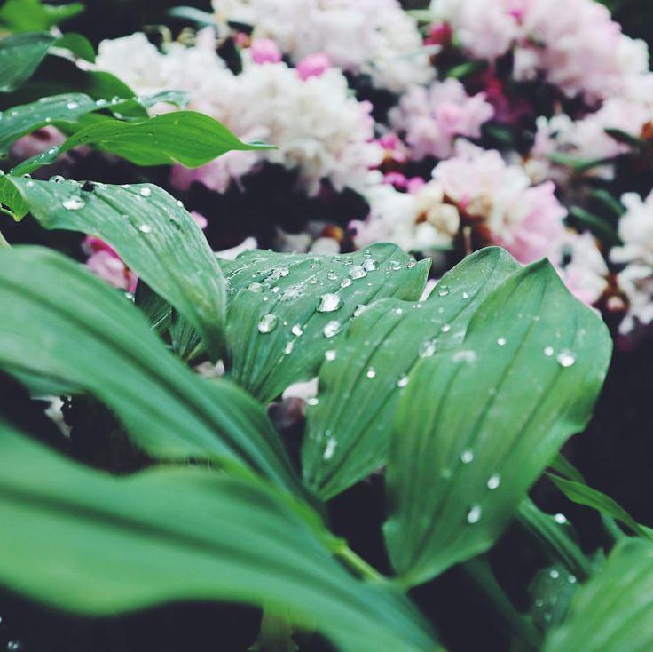 "77 Likes, 8 Comments - Alexa Holroyd (@alexaholroyd) on Instagram: ""Rain, rain, go away, come back again another day ☔️"""