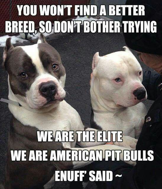 Damn straight Pitbulls are a very good breed once you go pit you never quit