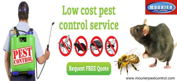 Call @ 9999787571. Mourier pest control gives you its best for pest control for home.  Bring them in your home and guard yourself, your family and your place with Mourier pest control eminent services. Call us now.