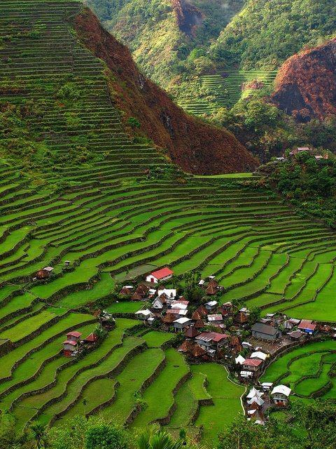 Where is this? Only in my dreams? I've come to find out this place is called  Banaue Rice Terraces, and it's located in the Philippines.