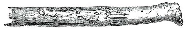 Bruniquel carved image Portion of wing-bone of a bird with incised outlines of the head of Reindeer (Cervus tarandus ) from the Cavern of Bruniquel about 14,000 YA