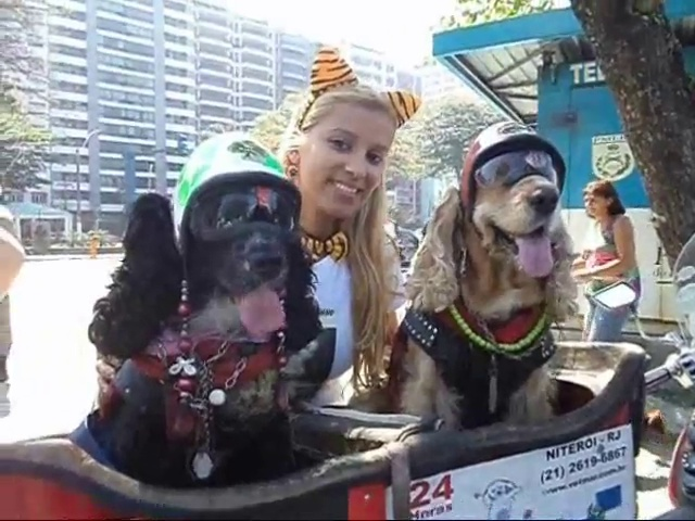 Dog That Has Traveled Over 100,000km On A Motorcycle. More information is available at http://www.people-with-pets-are-happier.com/nani-is-on-a-motorcycle  (100,000km is approximately  62,500 miles)