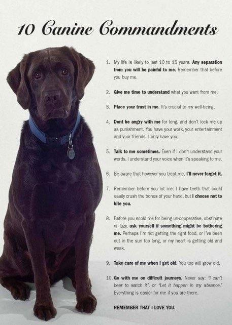 Dog commandments